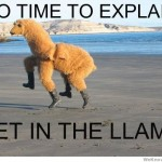 no-time-to-explain-get-in-the-llama
